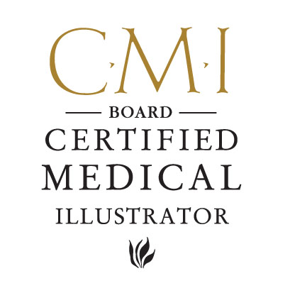 Certified medical illustrator